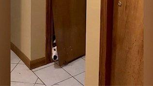 Мех и смех: собака, которая хочет морковь, неуклюжий кот, пробивные хаски и милый поросенок