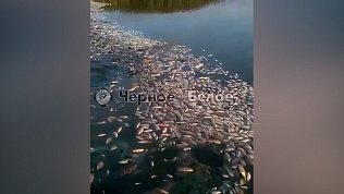 Мор рыбы на озере Ача-Куль попал на видео
