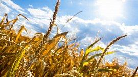 Ущерб от засухи в Челябинской области составил почти 1 млрд рублей