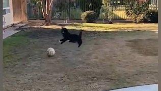 Мех и смех: кот-футболист, зазевавшийся пес и дружелюбная ворона