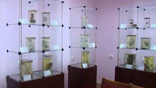 В Челябинске отсканируют более 300 эмбрионов из коллекции ЮУГМУ