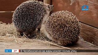 Как живут ежи в челябинском зоопарке в рубрике «Живой репортаж»