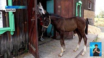 В клубе юных коневодов родился жеребенок