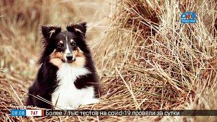 Фразеологизм «собака на сене» в рубрике «Добавь обороты»