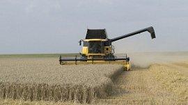 Челябинская область из-за засухи потеряла 17% запланированного урожая зерна