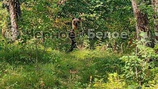 На озере вЧелябинской области южноуралец встретил медведей