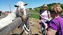 Сельский туризм в Челябинской области включили в список приоритетных направлений