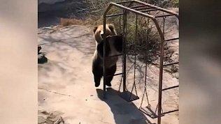 Мех и смех: танцующий медведь, кролик рэпер и грязевые ванны