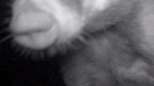 Таганайский барсук пофыркал в камеру фотоловушки