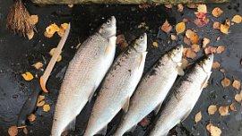 В Челябинской области вступают в силу новые правила рыболовства
