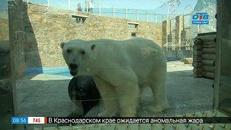 Медвежья рыбалка в рубрике «Живой репортаж»
