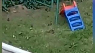 Видео нашествия грызунов на Урале