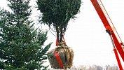Мэрия Челябинска безторгов раздала контракты повысадке деревьев напроспекте Ленина