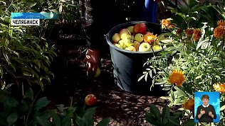 Садоводам некуда деть излишки урожая
