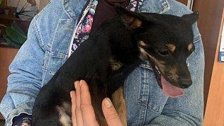 В Чебаркуле полицейские нашли собаку, украденную несколько месяцев назад