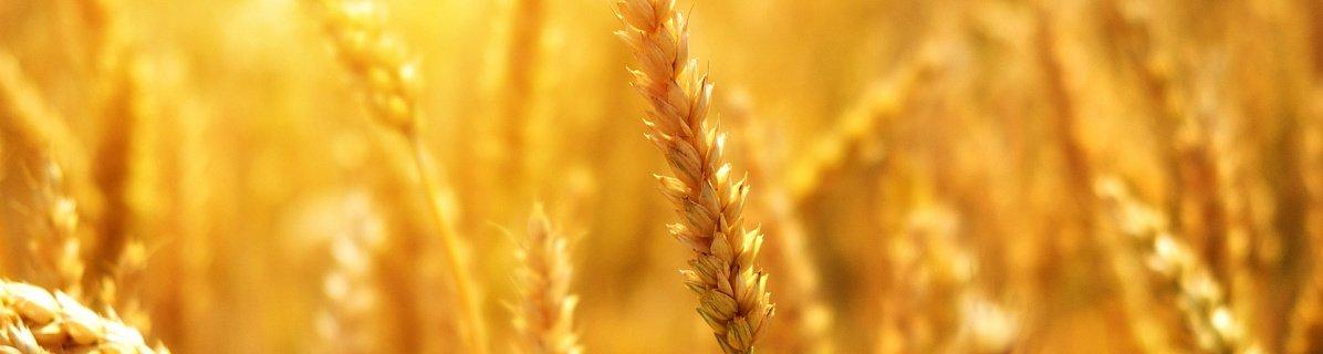 Южноуральские агроэкспортеры смогут открыть кредитные линии под низкий процент