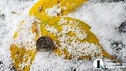 В Челябинскую область пришли заморозки имокрый снег
