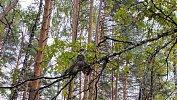Под Чебаркулем зоозащитники выпустили наволю неясыть и ушастую сову