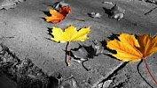 Осенняя хандра: как побороть и неперепутать сдепрессией