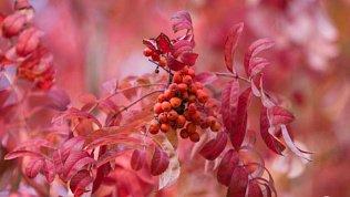 Праздничные и памятные даты 22 сентября в рубрике «Календарь» от «Нашего утра»