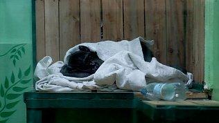 В Челябинском зоопарке утепляют вольеры к зиме: видео из жилищ енотовидных собак и лисиц