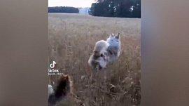 Мех и смех: скачущий пес, нападение на кота и медвежатник