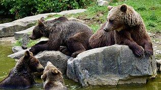 В Челябинском зоопарке умерли два бурых медведя