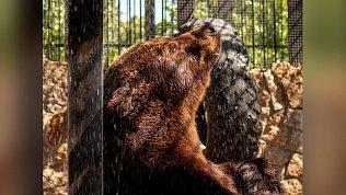 В Челябинском зоопарке погибли медведи Маша и Степан