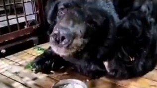 Медведь Харитон в Челябинском зоопарке потребовал добавки