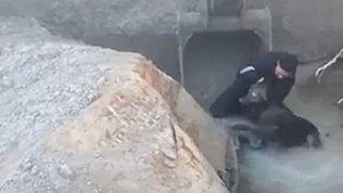 В Ханты-мансийском автономном округе спасли собаку из ямы с водой