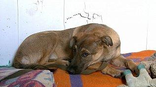 Как взять собаку из приюта: какие этапы проходят потенциальные хозяева питомцев