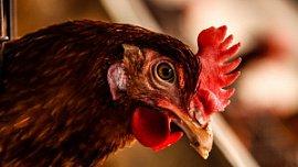 Снижение объемов производства не приведет к росту цен на курицу в Челябинской области
