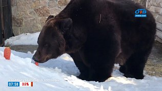 Воспоминания о медведях в сюжете «Памяти Стёпы и Маши»