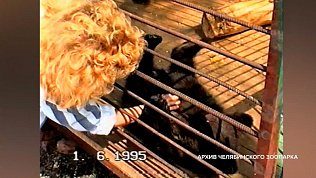 Видеосюжет в память о погибших медведях Челябинского зоопарка