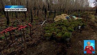 На месте природного пожара высадили деревья