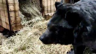 В Челябинском зоопарке сообщили о выздоровлении гималайского медведя Харитона