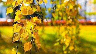 В Челябинской области установилась теплая и сухая погода