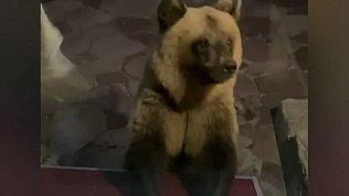 Операцию по спасению двух медвежат объявили в Челябинской области