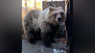 Первый спасенный на Банном медвежонок уже поселился в Челябинском зоопарке