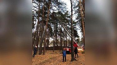 В Челябинске сотрудники МЧС поймали сбежавшего из зоопарка соболя