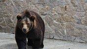 Челябинский зоопарк готов кприему башкирских медведей