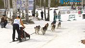 Под Кыштымом проходят международные гонки на собачьих упряжках