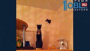 Летучая мышь залетела в квартиру к жителям спального района в Челябинске
