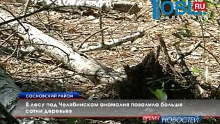 В лесу под Челябинском аномалия повалила больше сотни деревьев