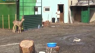Карен Даллакян в поисках втормета прочёсывает городские свалки