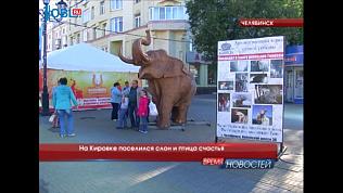 На Кировке поселился слон и птица счастья
