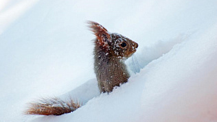 Снегоуборочная белка