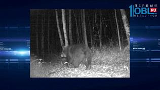 Дикие звери попали в объективы камер