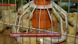 Птицефабрики и свинокомплексы переработают отходы в корма и удобрения