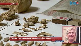 Краевед Владимир Юрин о продаже зуба мамонта